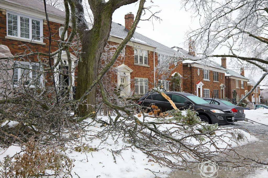 Ice storm damage to property in Leaside